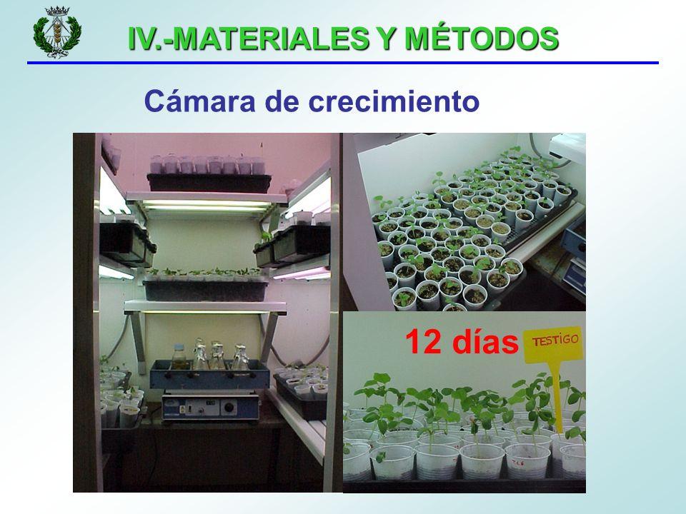 IV.-MATERIALES Y MÉTODOS Cámara de crecimiento 12 días