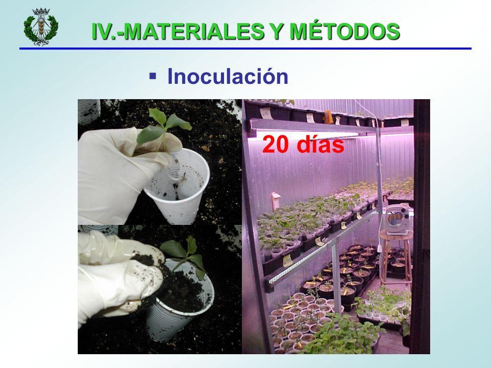 IV.-MATERIALES Y MÉTODOS Inoculación 20 días