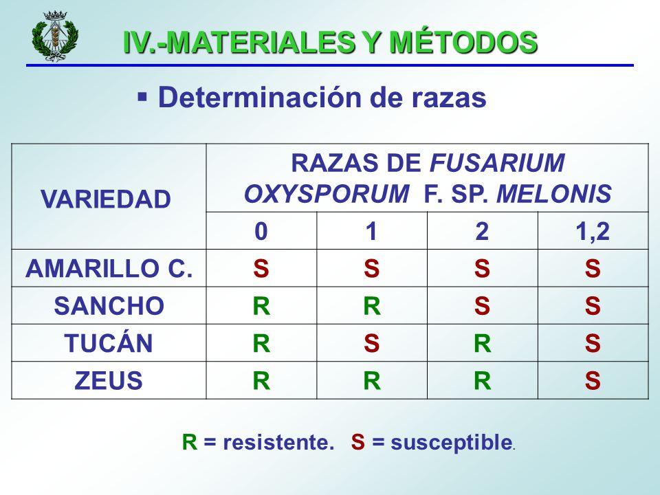 IV.-MATERIALES Y MÉTODOS Determinación de razas RAZAS DE FUSARIUM OXYSPORUM F. SP. MELONIS 0121,2 AMARILLO C.SSSS SANCHORRSS TUCÁNRSRS ZEUSRRRS R = re