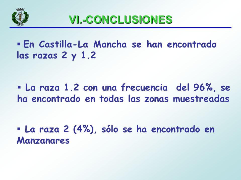 VI.-CONCLUSIONES En Castilla-La Mancha se han encontrado las razas 2 y 1.2 La raza 1.2 con una frecuencia del 96%, se ha encontrado en todas las zonas