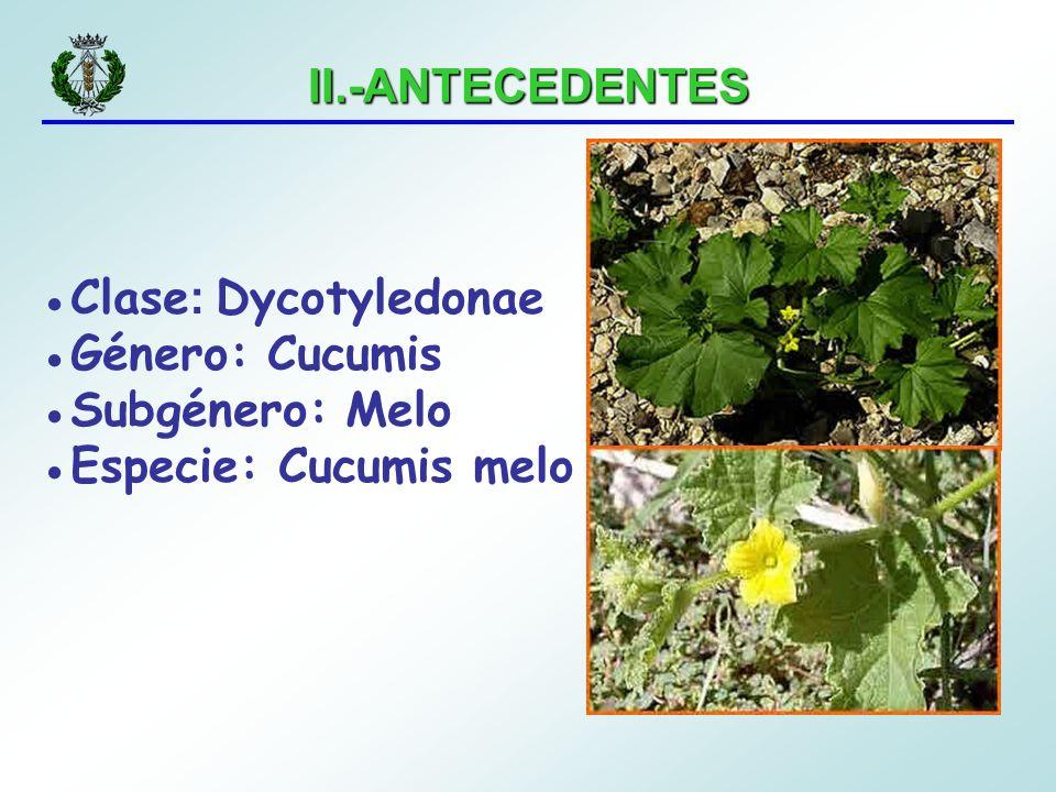 IV.-MATERIALES Y MÉTODOS Cálculo del índice de severidad Siendo: n: número de plantas afectadas por cada grado de severidad s: grado de severidad (0-4) en los ensayos de virulencia N: número total de plantas para cada repetición Índice de severidad (%) = n x s x 100 4 x N