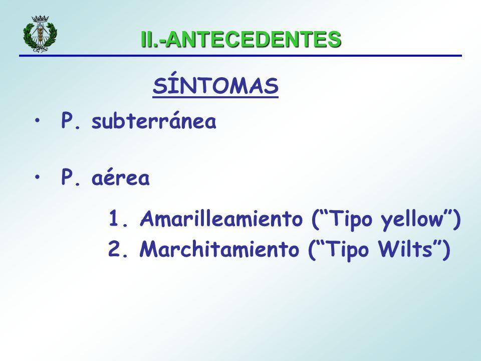 II.-ANTECEDENTES P. subterránea P. aérea 1. Amarilleamiento (Tipo yellow) 2. Marchitamiento (Tipo Wilts) SÍNTOMAS