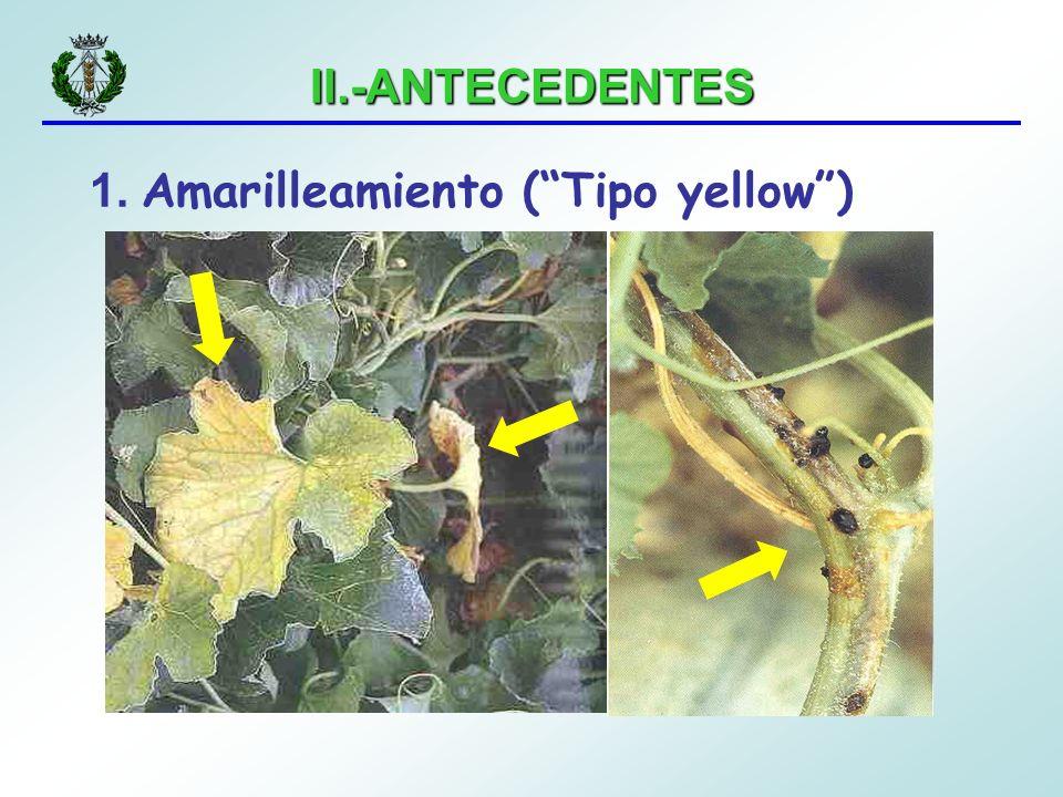 II.-ANTECEDENTES 1. Amarilleamiento (Tipo yellow)