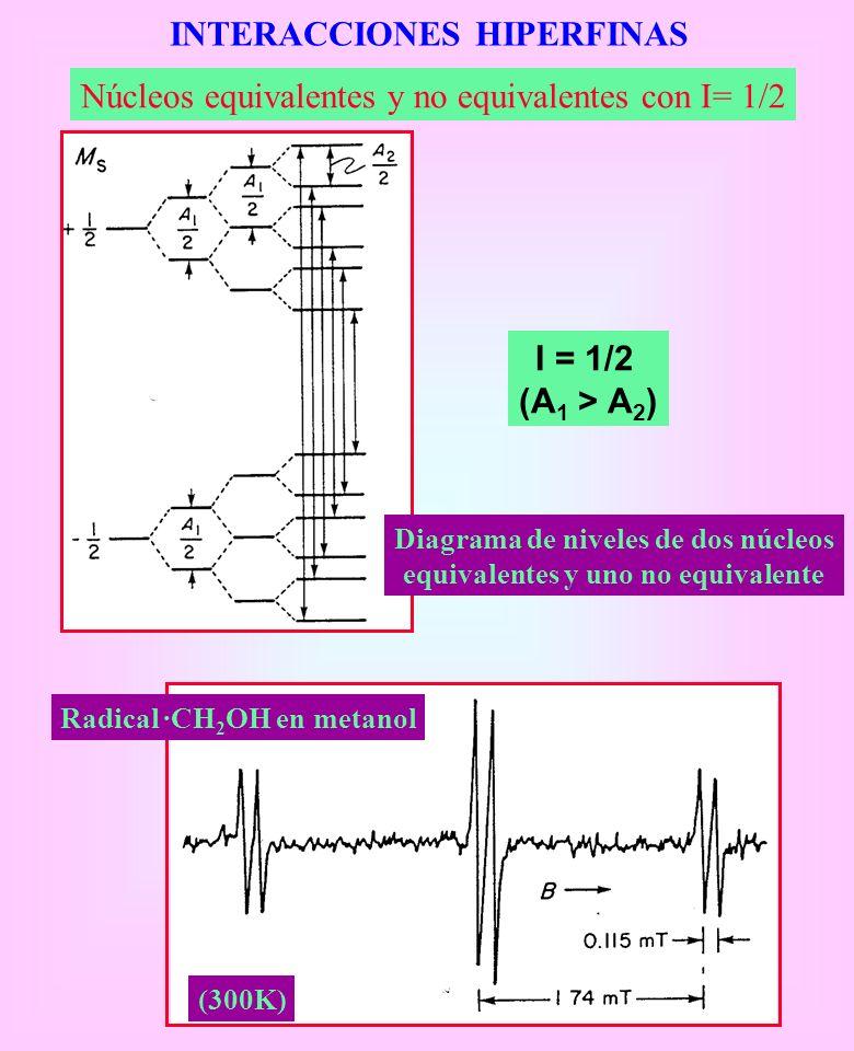 INTERACCIONES HIPERFINAS Núcleos equivalentes y no equivalentes con I= 1/2 I = 1/2 (A 1 > A 2 ) Diagrama de niveles de dos núcleos equivalentes y uno