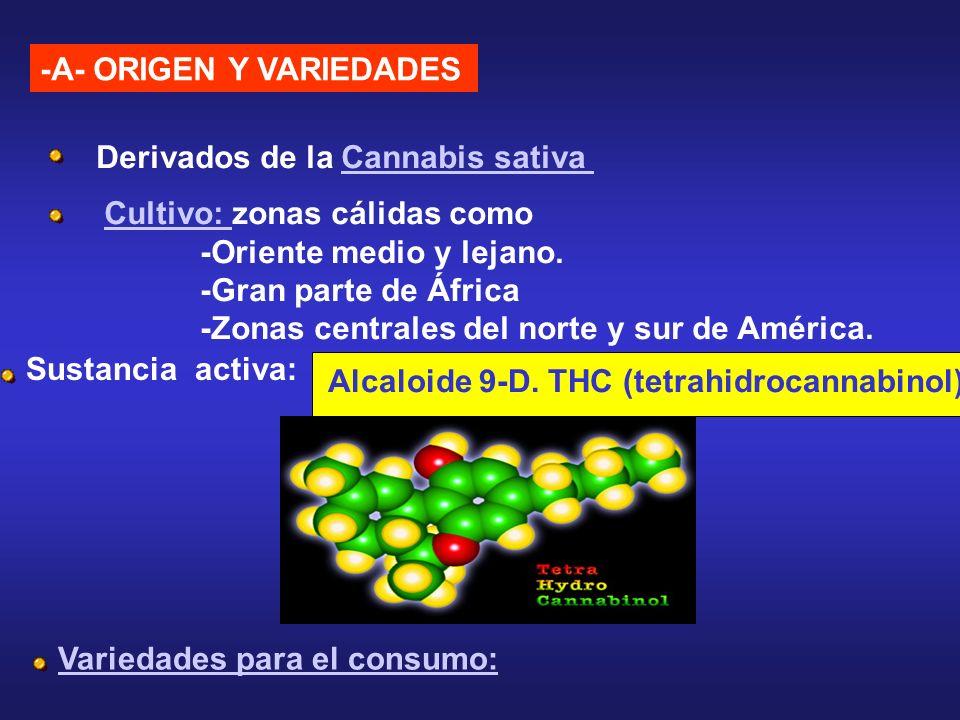 -A- ORIGEN Y VARIEDADES Derivados de la Cannabis sativaCannabis sativa Cultivo: Cultivo: zonas cálidas como -Oriente medio y lejano. -Gran parte de Áf