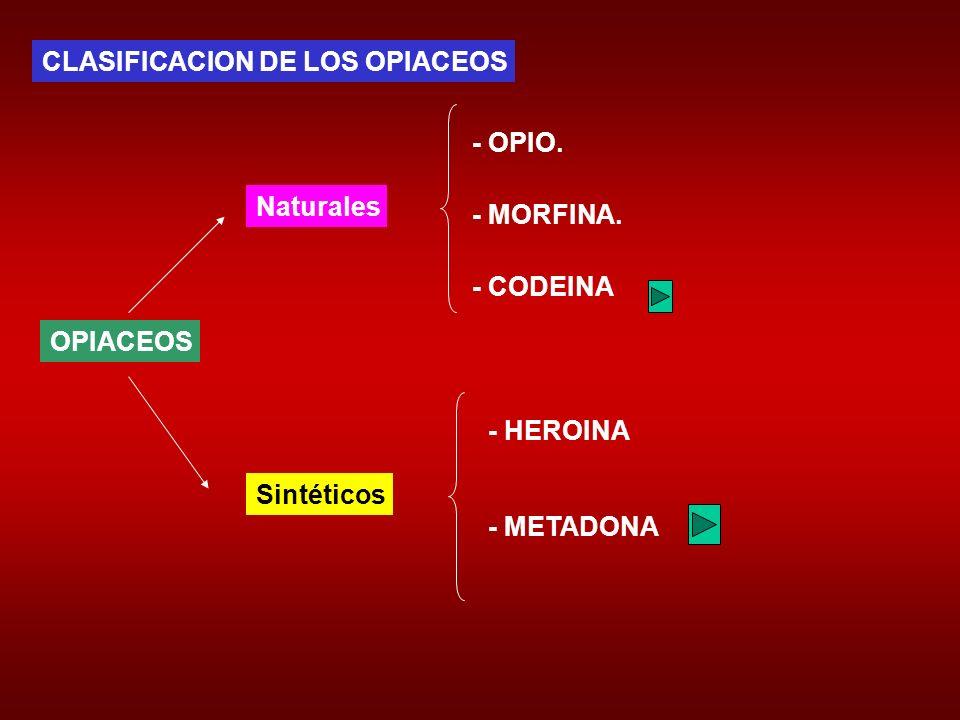 CLASIFICACION DE LOS OPIACEOS OPIACEOS Naturales Sintéticos - OPIO. - MORFINA. - CODEINA - HEROINA - METADONA