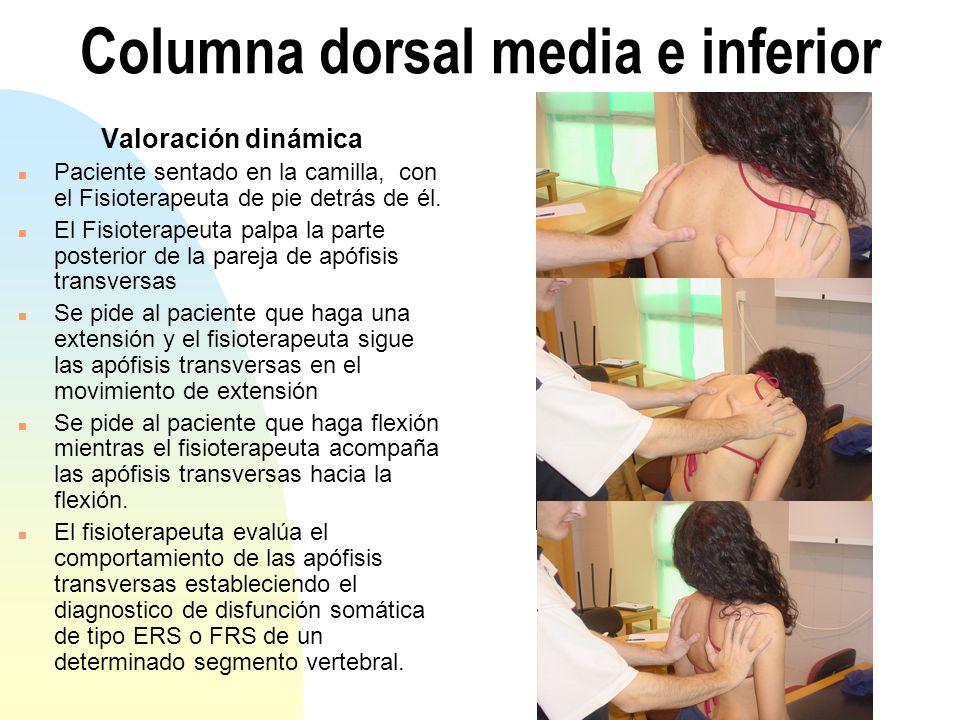 Columna dorsal media e inferior Valoración dinámica n Paciente sentado en la camilla, con el Fisioterapeuta de pie detrás de él. n El Fisioterapeuta p