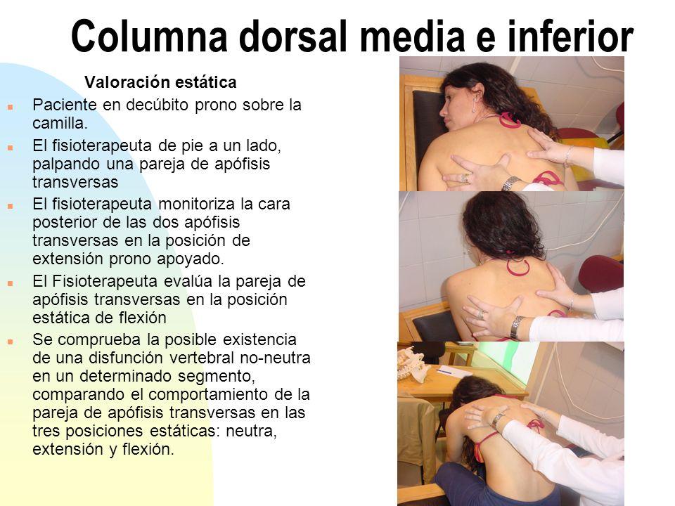 Columna dorsal media e inferior Valoración estática n Paciente en decúbito prono sobre la camilla. n El fisioterapeuta de pie a un lado, palpando una