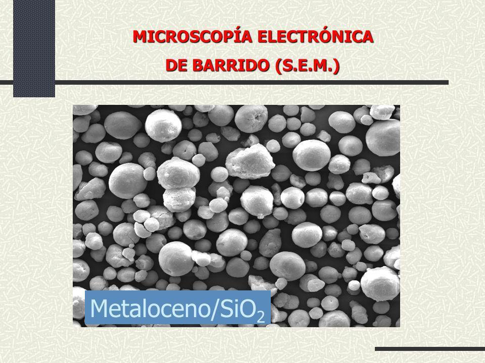 Metaloceno/SiO 2 MICROSCOPÍA ELECTRÓNICA DE BARRIDO (S.E.M.)