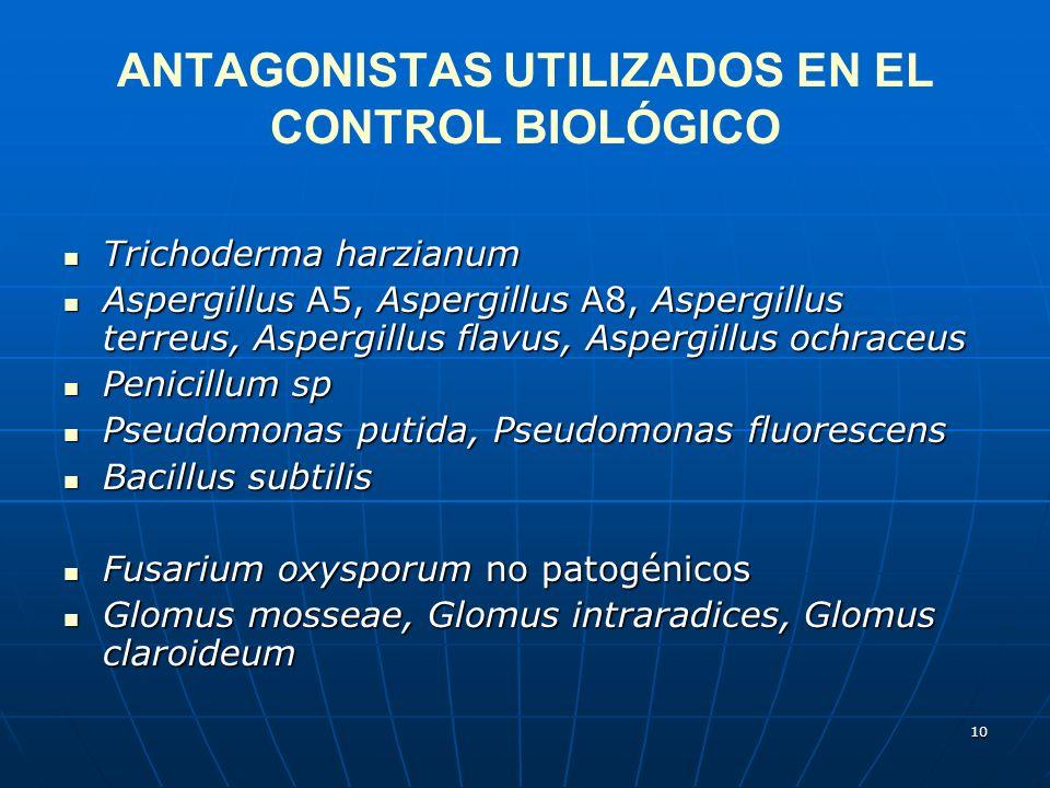 10 ANTAGONISTAS UTILIZADOS EN EL CONTROL BIOLÓGICO Trichoderma harzianum Trichoderma harzianum Aspergillus A5, Aspergillus A8, Aspergillus terreus, As