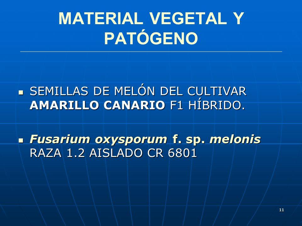 11 MATERIAL VEGETAL Y PATÓGENO SEMILLAS DE MELÓN DEL CULTIVAR AMARILLO CANARIO F1 HÍBRIDO. SEMILLAS DE MELÓN DEL CULTIVAR AMARILLO CANARIO F1 HÍBRIDO.