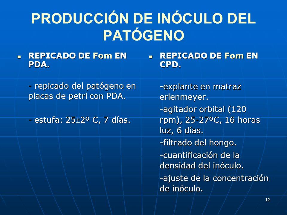 12 PRODUCCIÓN DE INÓCULO DEL PATÓGENO REPICADO DE Fom EN PDA. REPICADO DE Fom EN PDA. - repicado del patógeno en placas de petri con PDA. - estufa: 25
