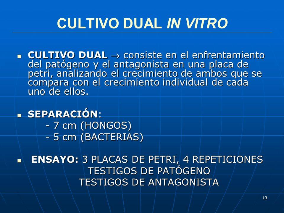 13 CULTIVO DUAL IN VITRO CULTIVO DUAL consiste en el enfrentamiento del patógeno y el antagonista en una placa de petri, analizando el crecimiento de