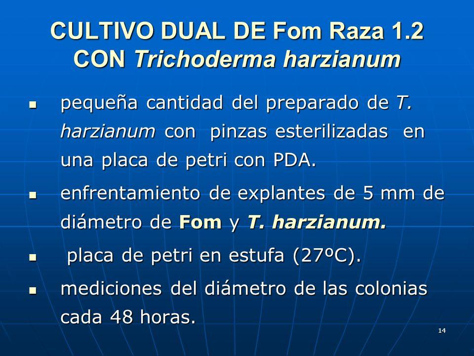 14 CULTIVO DUAL DE Fom Raza 1.2 CON Trichoderma harzianum pequeña cantidad del preparado de T. harzianum con pinzas esterilizadas en una placa de petr