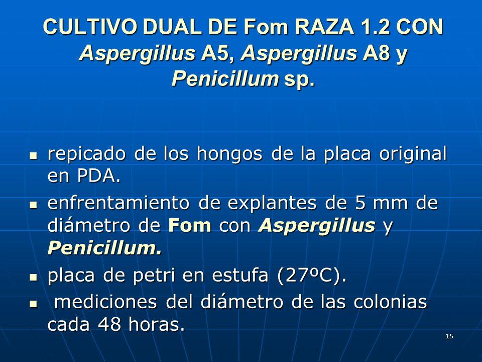 15 CULTIVO DUAL DE Fom RAZA 1.2 CON Aspergillus A5, Aspergillus A8 y Penicillum sp. repicado de los hongos de la placa original en PDA. repicado de lo