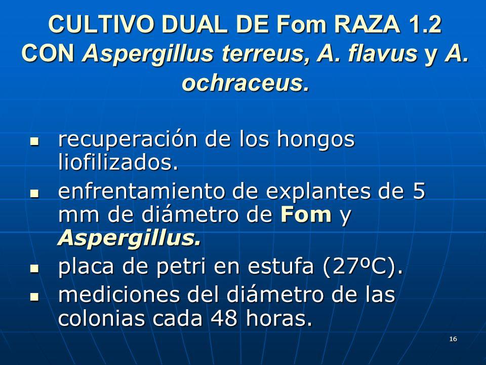 16 CULTIVO DUAL DE Fom RAZA 1.2 CON Aspergillus terreus, A. flavus y A. ochraceus. recuperación de los hongos liofilizados. recuperación de los hongos