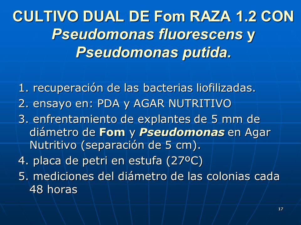 17 CULTIVO DUAL DE Fom RAZA 1.2 CON Pseudomonas fluorescens y Pseudomonas putida. 1. recuperación de las bacterias liofilizadas. 2. ensayo en: PDA y A