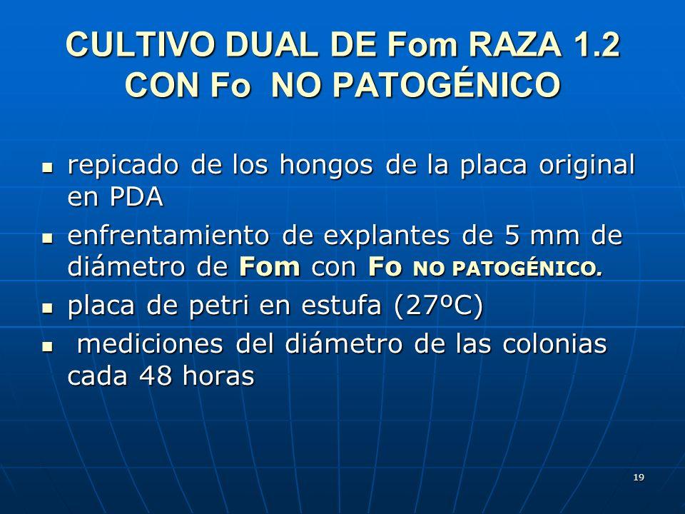 19 CULTIVO DUAL DE Fom RAZA 1.2 CON Fo NO PATOGÉNICO repicado de los hongos de la placa original en PDA repicado de los hongos de la placa original en