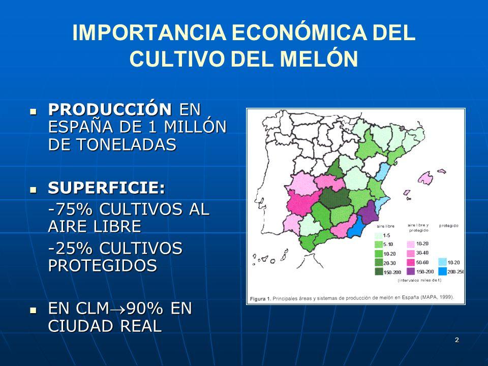 2 IMPORTANCIA ECONÓMICA DEL CULTIVO DEL MELÓN PRODUCCIÓN EN ESPAÑA DE 1 MILLÓN DE TONELADAS PRODUCCIÓN EN ESPAÑA DE 1 MILLÓN DE TONELADAS SUPERFICIE: