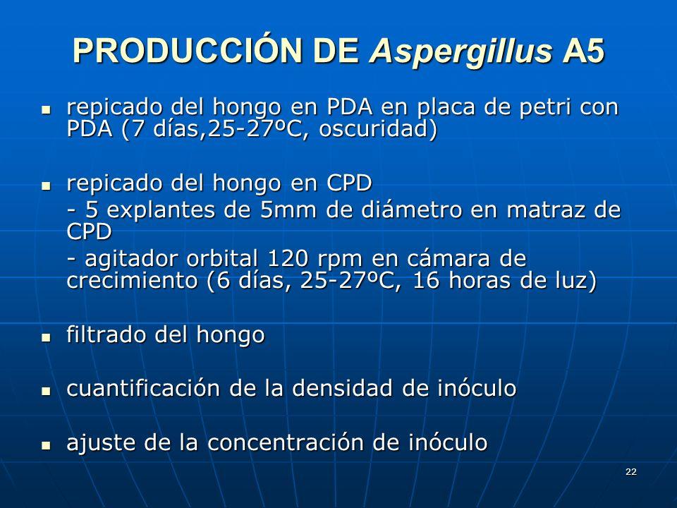22 PRODUCCIÓN DE Aspergillus A5 repicado del hongo en PDA en placa de petri con PDA (7 días,25-27ºC, oscuridad) repicado del hongo en PDA en placa de