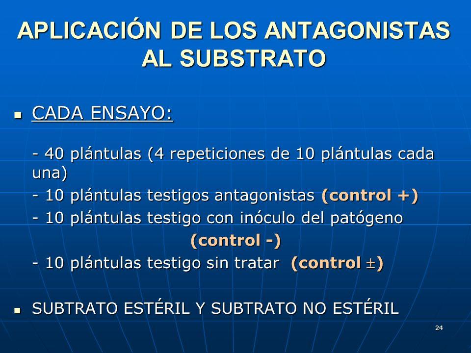 24 APLICACIÓN DE LOS ANTAGONISTAS AL SUBSTRATO CADA ENSAYO: CADA ENSAYO: - 40 plántulas (4 repeticiones de 10 plántulas cada una) - 10 plántulas testi
