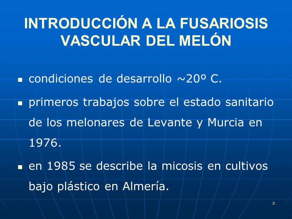 3 INTRODUCCIÓN A LA FUSARIOSIS VASCULAR DEL MELÓN condiciones de desarrollo ~20º C. primeros trabajos sobre el estado sanitario de los melonares de Le