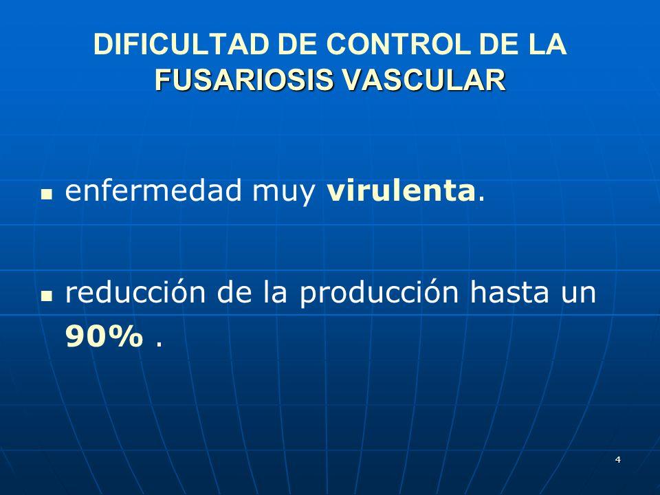 4 FUSARIOSIS VASCULAR DIFICULTAD DE CONTROL DE LA FUSARIOSIS VASCULAR enfermedad muy virulenta. reducción de la producción hasta un 90%.