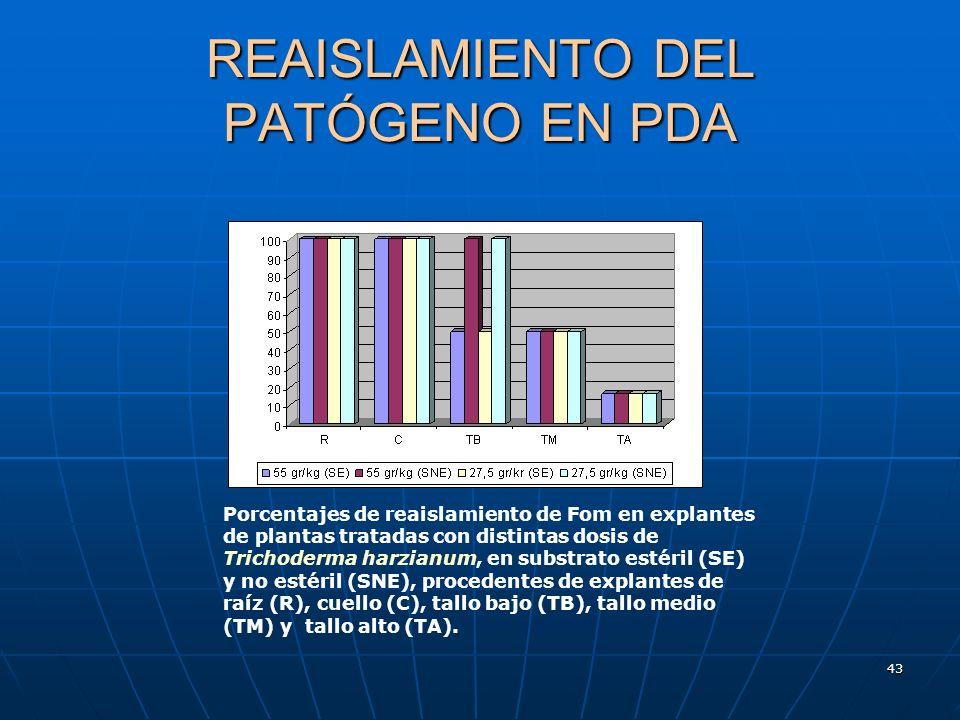 43 REAISLAMIENTO DEL PATÓGENO EN PDA Porcentajes de reaislamiento de Fom en explantes de plantas tratadas con distintas dosis de Trichoderma harzianum