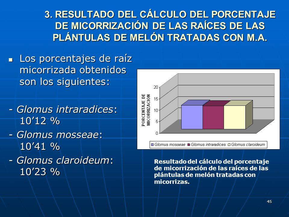 45 3.RESULTADO DEL CÁLCULO DEL PORCENTAJE DE MICORRIZACIÓN DE LAS RAÍCES DE LAS PLÁNTULAS DE MELÓN TRATADAS CON M.A. 3. RESULTADO DEL CÁLCULO DEL PORC