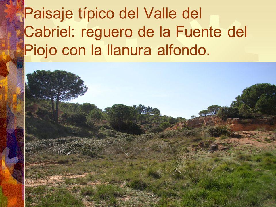 Paisaje típico del Valle del Cabriel: reguero de la Fuente del Piojo con la llanura alfondo.