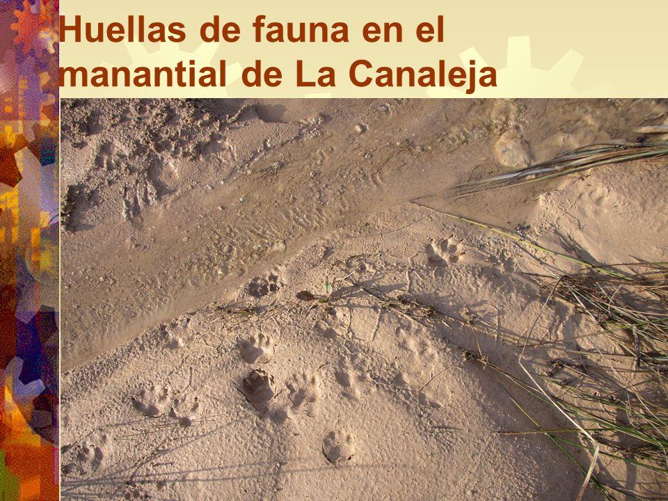 Huellas de fauna en el manantial de La Canaleja