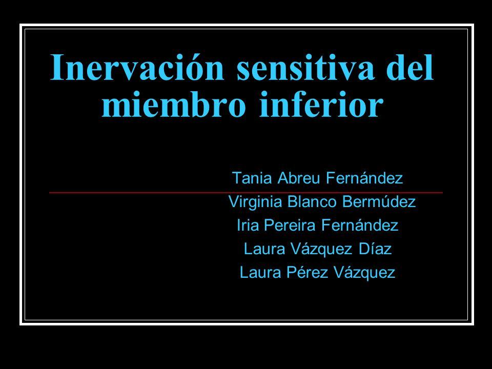 Inervación sensitiva del miembro inferior Tania Abreu Fernández Virginia Blanco Bermúdez Iria Pereira Fernández Laura Vázquez Díaz Laura Pérez Vázquez