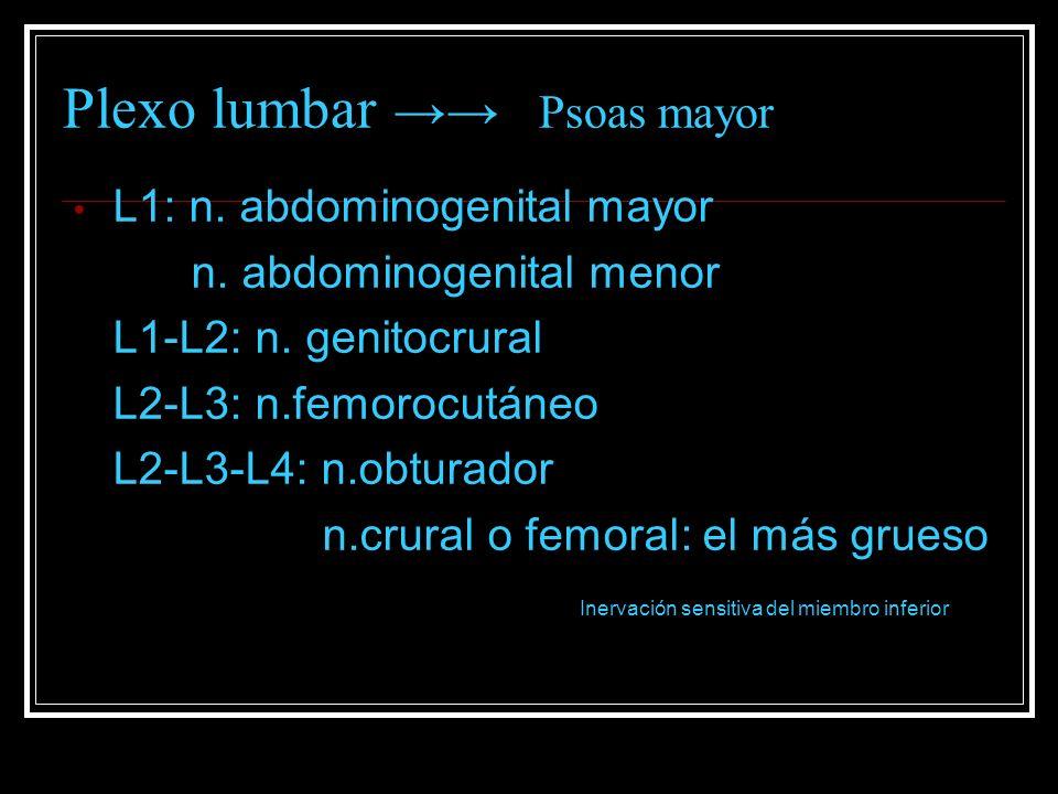 Plexo lumbar Psoas mayor L1: n. abdominogenital mayor n. abdominogenital menor L1-L2: n. genitocrural L2-L3: n.femorocutáneo L2-L3-L4: n.obturador n.c