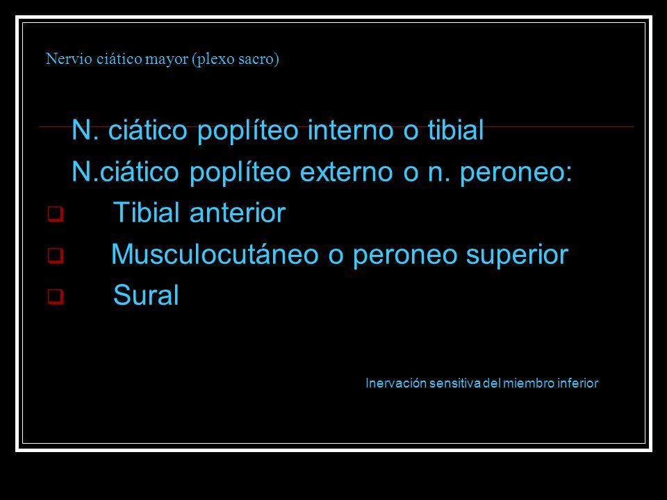 Nervio ciático mayor (plexo sacro) N. ciático poplíteo interno o tibial N.ciático poplíteo externo o n. peroneo: Tibial anterior Musculocutáneo o pero