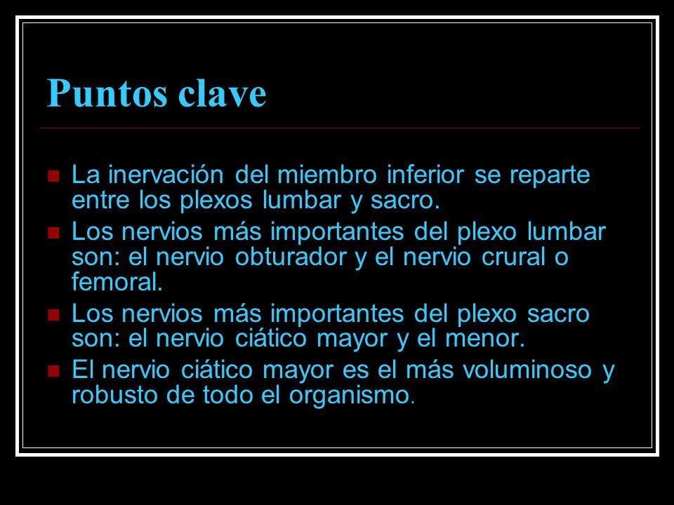 Puntos clave La inervación del miembro inferior se reparte entre los plexos lumbar y sacro. Los nervios más importantes del plexo lumbar son: el nervi
