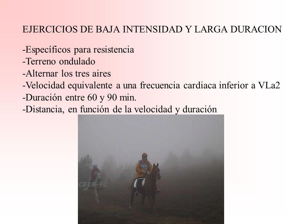FASES DEL ENTRENAMIENTO: 2.- Entrenamiento especifico: Se realizan para la puesta a punto. A) Ejercicios de baja intensidad y larga duración B) Ejerci