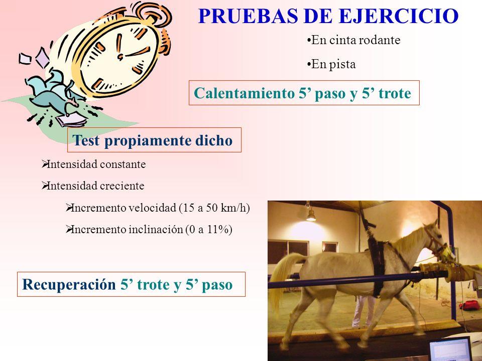 FORMATOS DEL ENTRENAMIENTO INTERVÁLICO Galope submáximo sobre una distancia (3.000 m) Recuperación parcial al paso o trote (400 m) Realizar el número