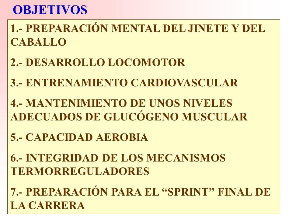 FACTORES DETERMINANTES DE LA CAPACIDAD ATLETICA. *GENETICOS *AMBIENTALES +Nutrición +Superficie de la pista. +Jinete *ENTRENAMIENTO