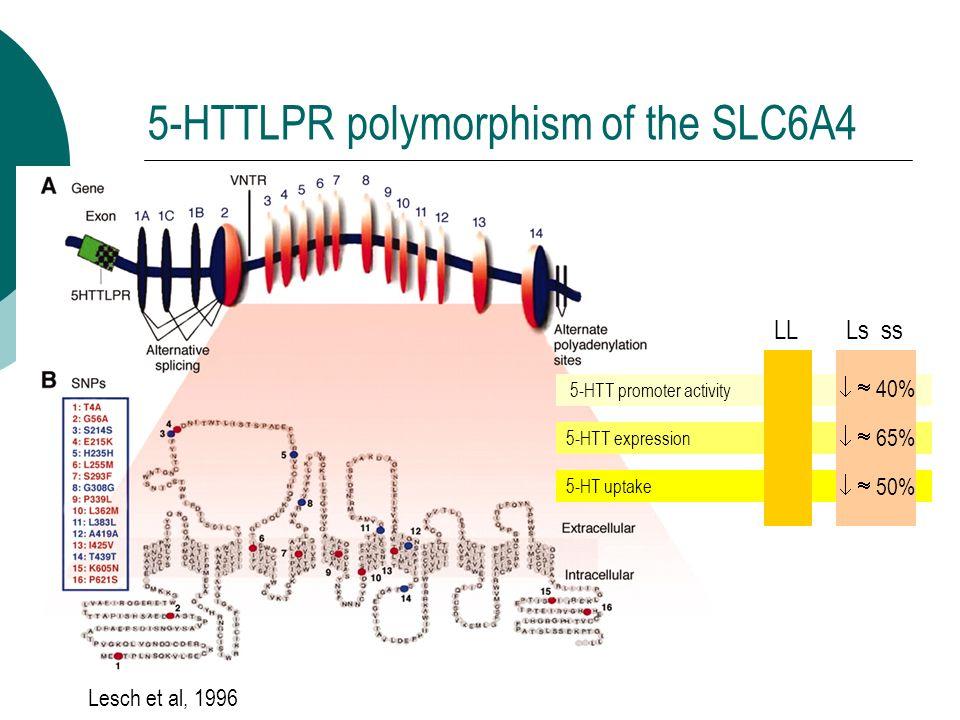 5-HTTLPR polymorphism of the SLC6A4 5-HTT promoter activity 5-HTT expression 5-HT uptake LL Ls ss 40% 65% 50% Lesch et al, 1996