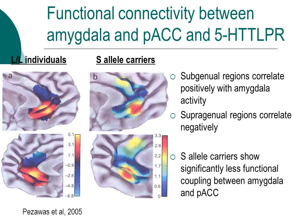 Functional connectivity between amygdala and pACC and 5-HTTLPR Pezawas et al, 2005 L/L individualsS allele carriers Subgenual regions correlate positi