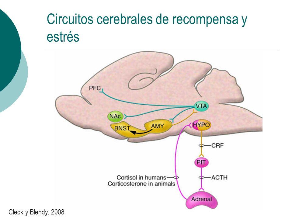 Circuitos cerebrales de recompensa y estrés Cleck y Blendy, 2008