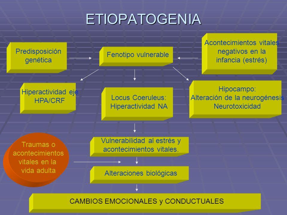 ETIOPATOGENIA Predisposición genética Fenotipo vulnerable Acontecimientos vitales negativos en la infancia (estrés) Hiperactividad eje HPA/CRF Locus C