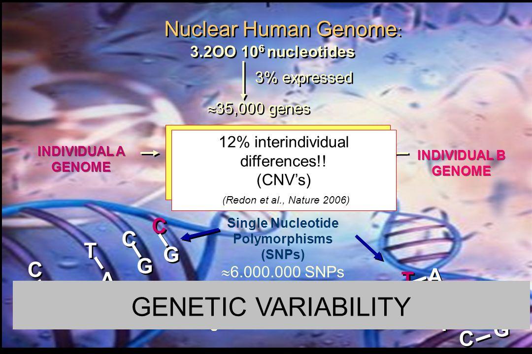 0.1% interindividual differences estimated in Homo sapiens (Sachidanandam et al., Nature 2001) INDIVIDUAL A GENOME INDIVIDUAL A GENOME INDIVIDUAL B GE