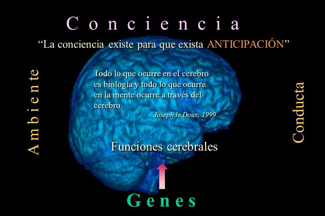 Todo lo que ocurre en el cerebro es biología y todo lo que ocurre en la mente ocurre a través del cerebro. Joseph le Doux, 1999 Todo lo que ocurre en