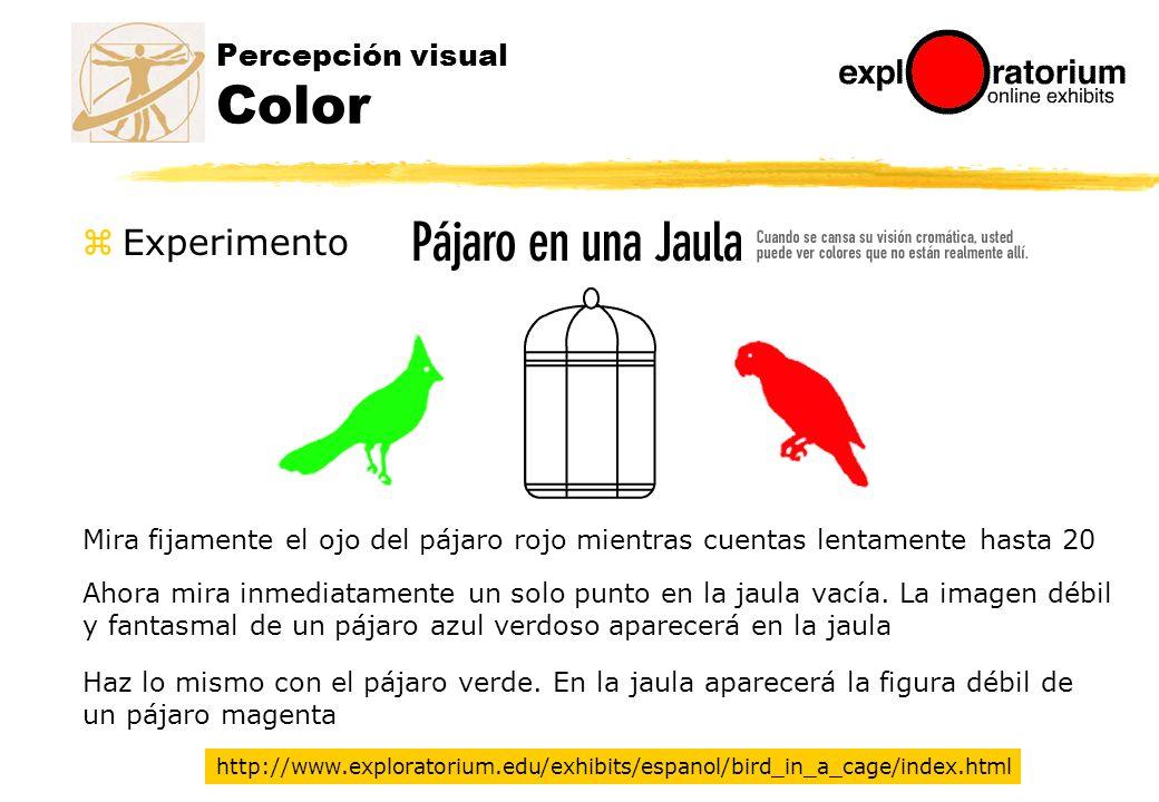 Mira fijamente el ojo del pájaro rojo mientras cuentas lentamente hasta 20 Percepción visual Color http://www.exploratorium.edu/exhibits/espanol/bird_