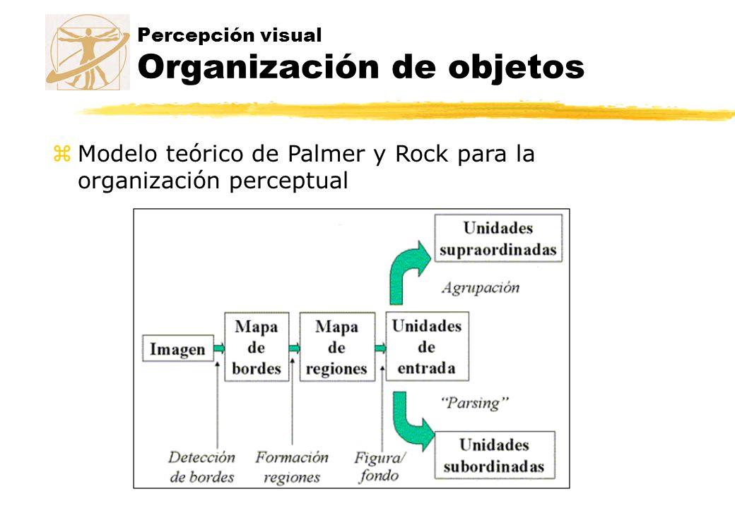Percepción visual Organización de objetos zModelo teórico de Palmer y Rock para la organización perceptual