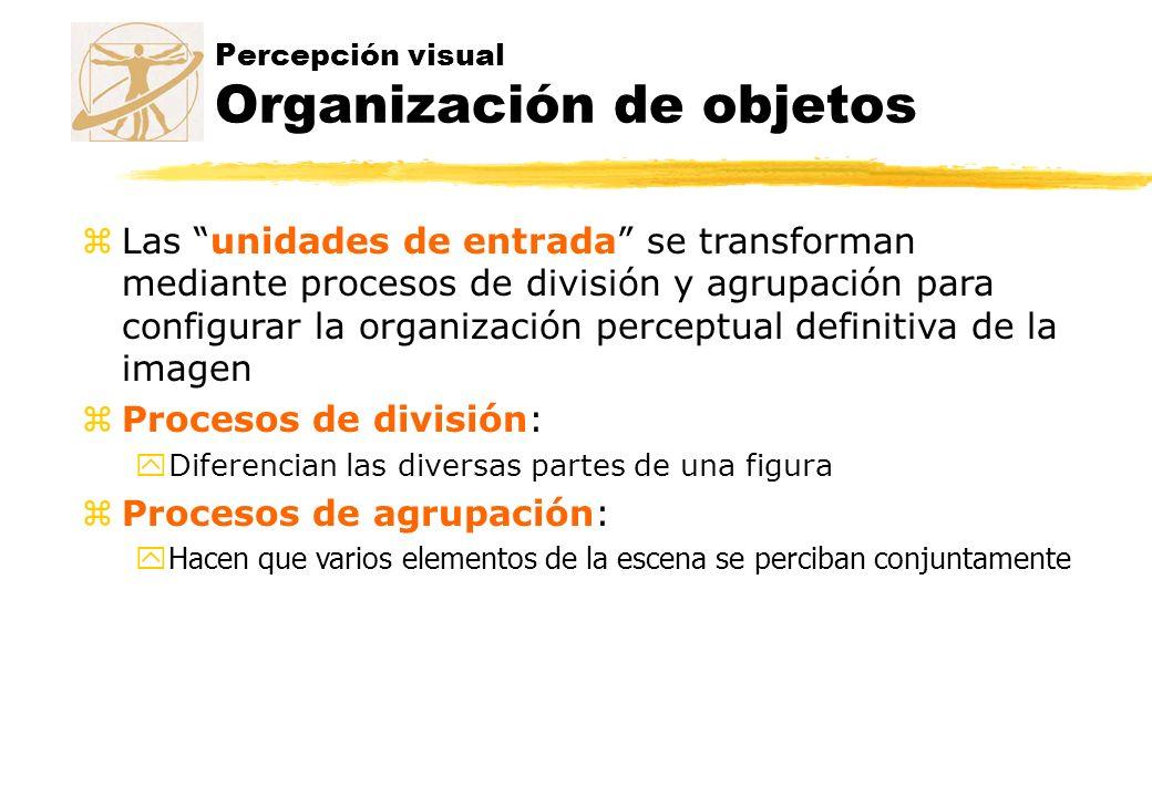 Percepción visual Organización de objetos zLas unidades de entrada se transforman mediante procesos de división y agrupación para configurar la organi