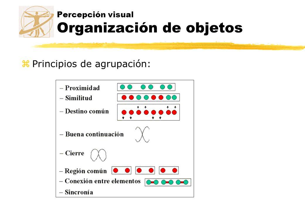 Percepción visual Organización de objetos zPrincipios de agrupación: