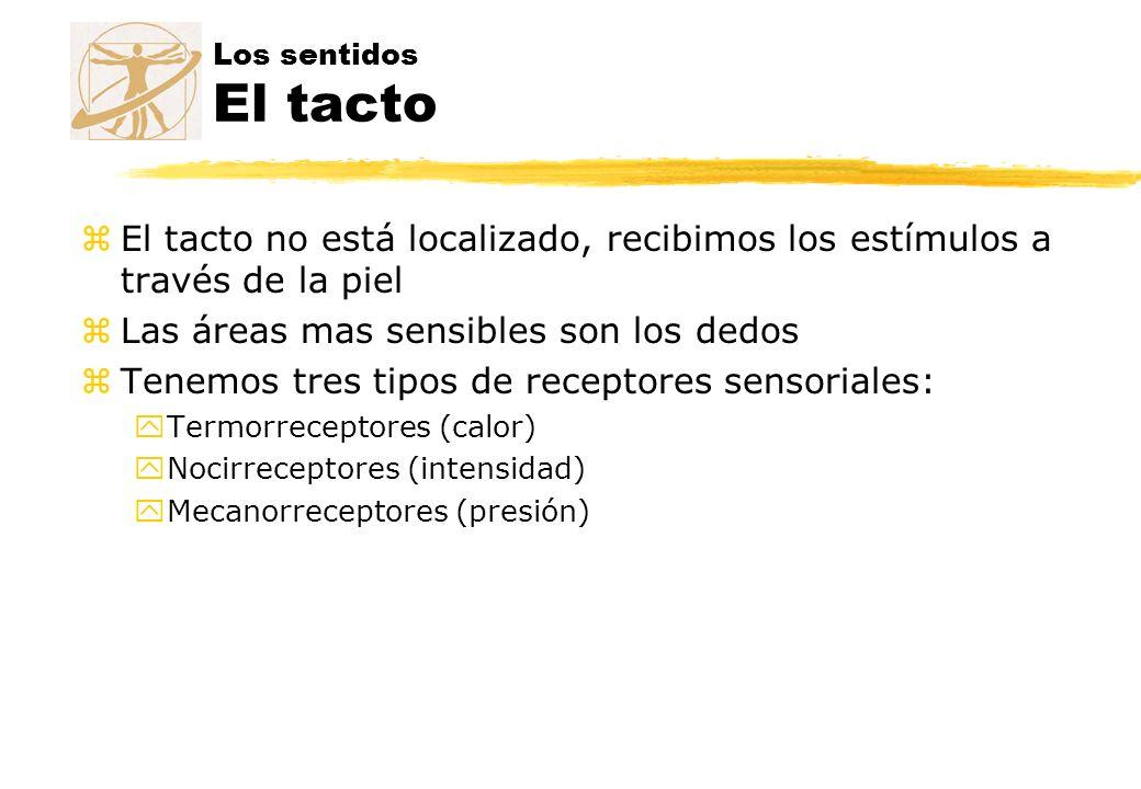 Los sentidos El tacto zEl tacto no está localizado, recibimos los estímulos a través de la piel zLas áreas mas sensibles son los dedos zTenemos tres t