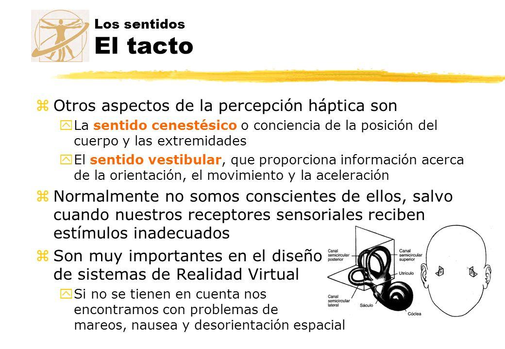 Los sentidos El tacto zOtros aspectos de la percepción háptica son yLa sentido cenestésico o conciencia de la posición del cuerpo y las extremidades y